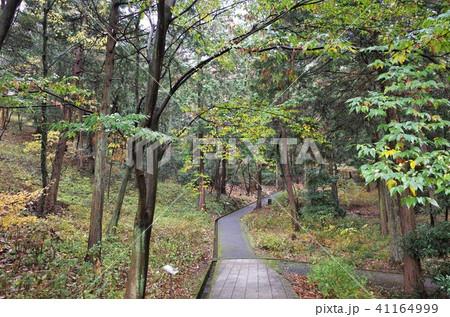 春の公園の青い木々、深い森 41164999
