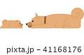 見つめ合う子犬と親犬 41168176