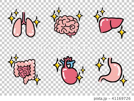 きれいな内臓:セット 41169726