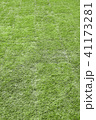 grass or lawn vertical background 41173281