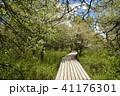 風景 木道 湿原の写真 41176301