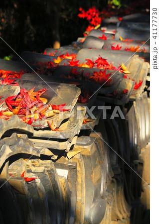 瓦と紅葉の風景(埼玉県川口市) 41177730