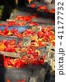 瓦と紅葉の風景(埼玉県川口市) 41177732