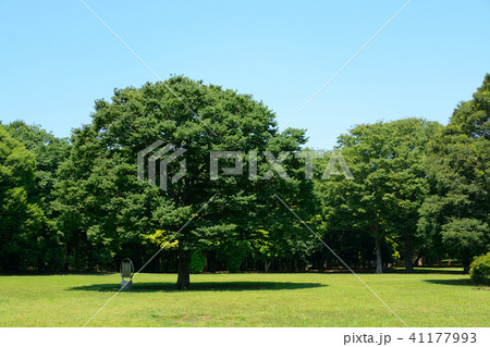 小金井公園 41177993