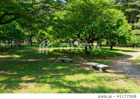 小金井公園 41177998