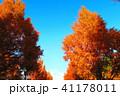 秋の舎人公園(東京都足立区)の風景 41178011