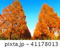 秋の舎人公園(東京都足立区)の風景 41178013