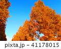 秋の舎人公園(東京都足立区)の風景 41178015