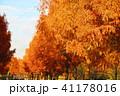 秋の舎人公園(東京都足立区)の風景 41178016