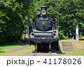 小金井公園 春 新緑の写真 41178026