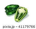 水彩画 ピーマン 野菜のイラスト 41179766