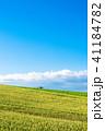 風景 畑 丘の写真 41184782