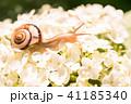 あじさいとカタツムリ・梅雨イメージ 41185340