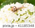 あじさいとカタツムリ・梅雨イメージ 41185348