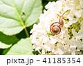 あじさいとカタツムリ・梅雨イメージ 41185354