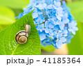 あじさいとカタツムリ・梅雨イメージ 41185364