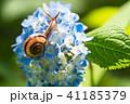 あじさいとカタツムリ・梅雨イメージ 41185379