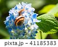 あじさいとカタツムリ・梅雨イメージ 41185383