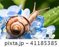 あじさいとカタツムリ・梅雨イメージ 41185385
