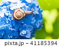 あじさいとカタツムリ・梅雨イメージ 41185394