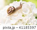 あじさいとカタツムリ・梅雨イメージ 41185397