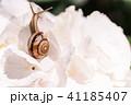 あじさいとカタツムリ・梅雨イメージ 41185407