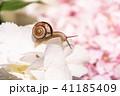 あじさいとカタツムリ・梅雨イメージ 41185409
