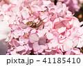 あじさいとカタツムリ・梅雨イメージ 41185410