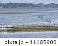 松川浦 自然 海の写真 41185900