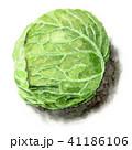 キャベツ 野菜 食べ物のイラスト 41186106