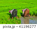 農業 農耕 アジア圏の写真 41196277