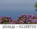 桃源郷の紫陽花 41198724