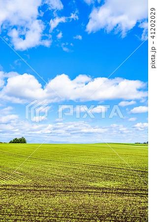 十勝平野の風景 41202029