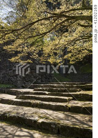 カエデの木の下の人吉城跡の足段 41202169