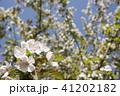 枝をバックにホンカイドウの花のアップ 41202182