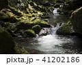 奥十曽渓谷の流れと苔むした岩 41202186