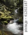 奥十曽渓谷の流れと苔むした岩 41202187