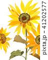 花 ひまわり 水彩のイラスト 41202577