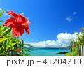 沖縄 海 ハイビスカスの写真 41204210
