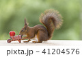 red squirrel and an wheelbarrow with a Strawberry 41204576