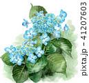紫陽花 花 植物のイラスト 41207603