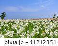 舞洲ゆり園 41212351