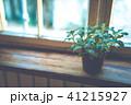 観葉植物 植物 窓の写真 41215927