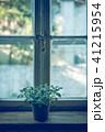 窓 観葉植物 植物の写真 41215954