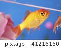 花と金魚 41216160