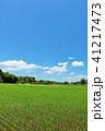 青空 晴れ 田園の写真 41217473