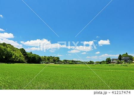 爽やかな夏の青空と田園風景 41217474
