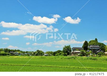 爽やかな夏の青空と農村風景 41217475