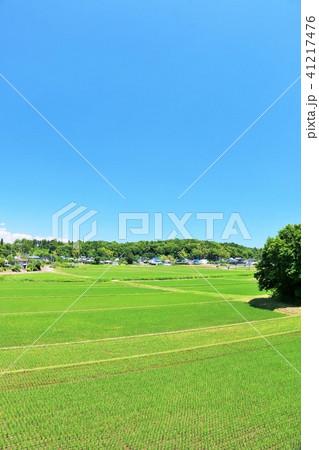 夏の青空と広い田んぼ風景 41217476