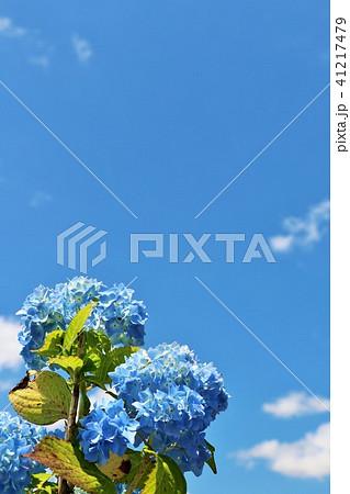 青空と白い雲 そして紫陽花 41217479